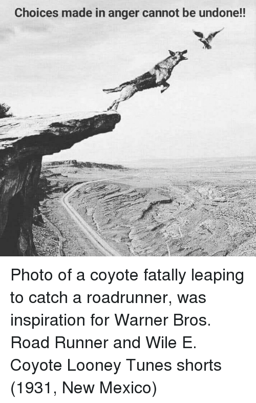 New Mexico: Choices made in anger cannot be undone!! Photo of a coyote fatally leaping to catch a roadrunner, was inspiration for Warner Bros. Road Runner and Wile E. Coyote Looney Tunes shorts (1931, New Mexico)