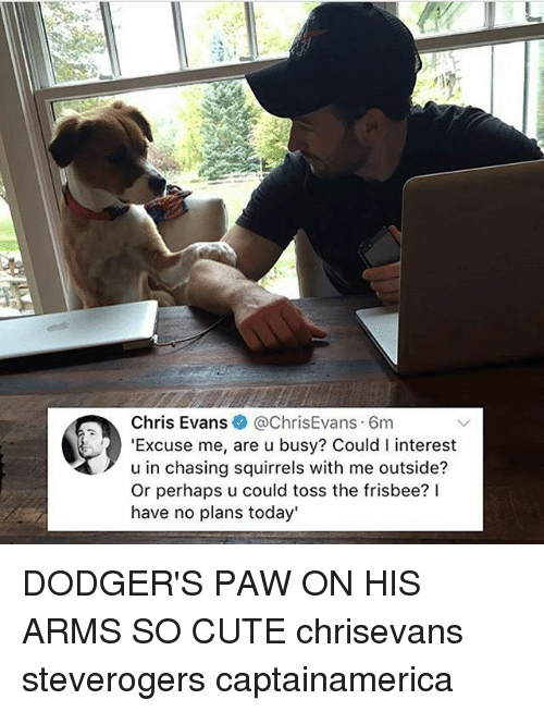 pawe: Chris Evans@ChrisEvans 6m  'Excuse me, are u busy? Could I interest  u in chasing squirrels with me outside?  Or perhaps u could toss the frisbee? lI  have no plans today' DODGER'S PAW ON HIS ARMS SO CUTE chrisevans steverogers captainamerica