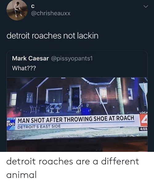 Detroit, Animal, and Shoe: @chrisheauxx  detroit roaches not lackin  Mark Caesar @pissyopants1  What???  LOCA  MAN SHOT AFTER THROWING SHOE AT ROACH  :00  DETROIT'S EAST SIDE  4:03 detroit roaches are a different animal