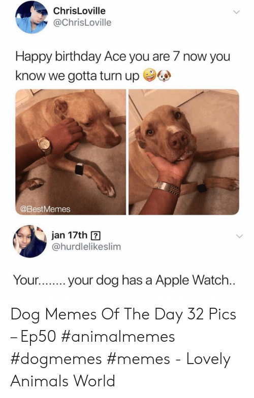 Animals, Apple, and Apple Watch: ChrisLoville  @ChrisLoville  Happy birthday Ace you are 7 now you  know we gotta turn up  @BestMemes  jan 17th  @hurdlelikeslim  Your...  your dog has a Apple Watch... Dog Memes Of The Day 32 Pics – Ep50 #animalmemes #dogmemes #memes - Lovely Animals World