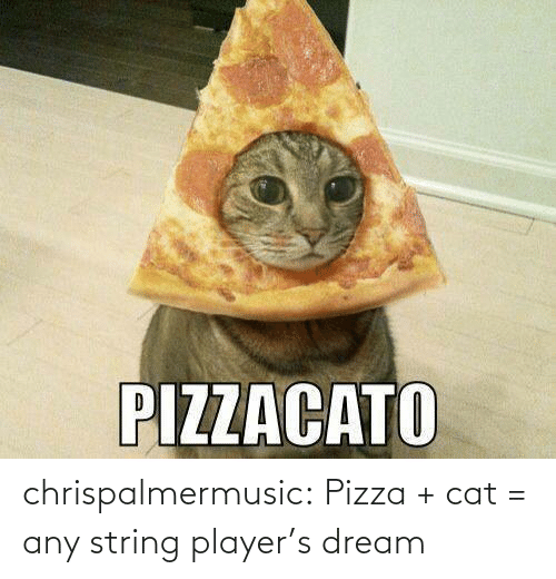 players: chrispalmermusic:  Pizza + cat = any string player's dream