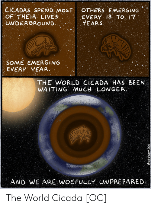 17 years: CICADAS SPEND MOST  OF THEIR LIVES  UNDERGROUNO  OTHERS EMERGING  EVERY 13 TO 17  YEARS.  SOME EMERGING  EVERY YEAR  THE WORLD CICADA HAS BEEN  WAITING AMUCH LONGER.  AND WE ARE WOEFULLY UNPREPARED  @GFBCOMICS The World Cicada [OC]