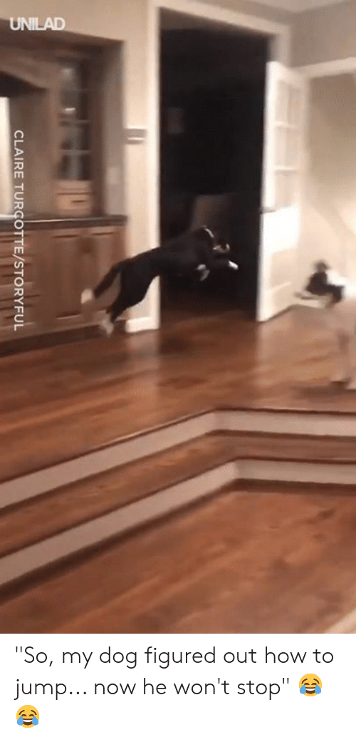 """Claire: CLAIRE TURCOTTE/STORYFUL """"So, my dog figured out how to jump... now he won't stop"""" 😂😂"""