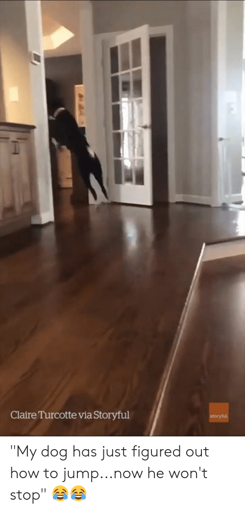 "How To, How, and Dog: Claire Turcotte via Storyful ""My dog has just figured out how to jump...now he won't stop"" 😂😂"