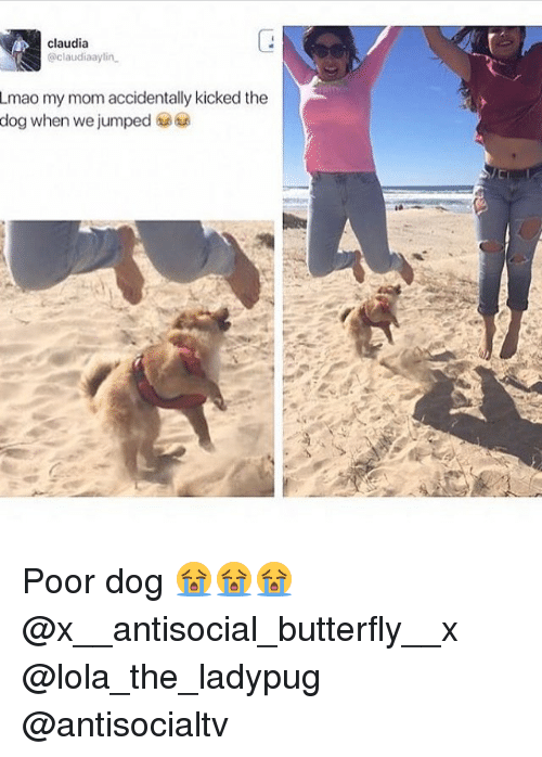 lolas: claudia  @claudiaaylin  Lmao my mom accidentally kicked the  dog when we jumped 6 Poor dog 😭😭😭 @x__antisocial_butterfly__x @lola_the_ladypug @antisocialtv