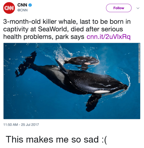 SeaWorld: CN  Follow  @CNN  3-month-old killer whale, last to be born in  captivity at SeaWorld, died after serious  health problems, park says cnn.it/2uVlxRq  1:50 AM-25 Jul 2017 <p>This makes me so sad :(</p>