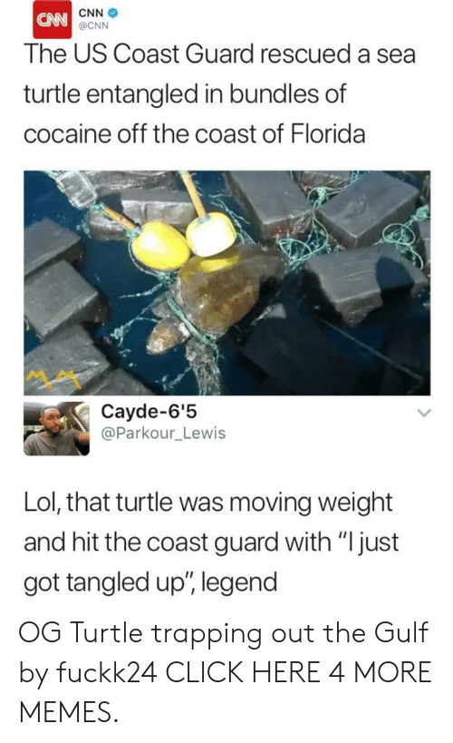 """trapping: CNN  CN  @CNN  The US Coast Guard rescued a sea  turtle entangled in bundles of  cocaine off the coast of Florida  Cayde-6'5  @Parkour_Lewis  Lol, that turtle was moving weight  and hit the coast guard with """"