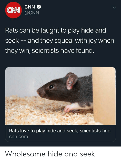 cnn.com, Love, and Wholesome: CNN  CNN@CNN  Rats can be taught to play hide and  seek -- and they squeal with joy when  they win, scientists have found.  Rats love to play hide and seek, scientists find  cnn.com Wholesome hide and seek