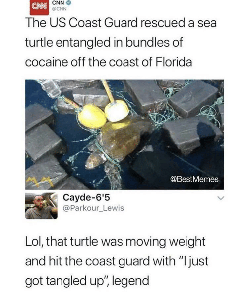 "Tangled: CNN  @CNN  The US Coast Guard rescued a sea  turtle entangled in bundles of  cocaine off the coast of Florida  @BestMemes  Cayde-6'5  @Parkour_Lewis  Lol, that turtle was moving weight  and hit the coast guard with ""just  got tangled up', legend"