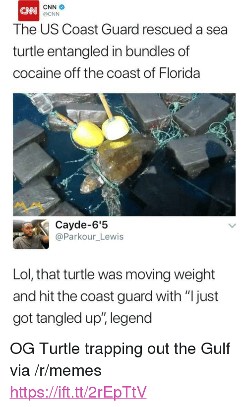 """cnn.com, Lol, and Memes: CNN  The US Coast Guard rescued a sea  turtle entangled in bundles of  cocaine off the coast of Florida  @CNN  ペペ  Cayde-6'!5  @Parkour_Lewis  Lol, that turtle was moving weight  and hit the coast guard with """"Ijust  got tangled up"""", legend <p>OG Turtle trapping out the Gulf via /r/memes <a href=""""https://ift.tt/2rEpTtV"""">https://ift.tt/2rEpTtV</a></p>"""
