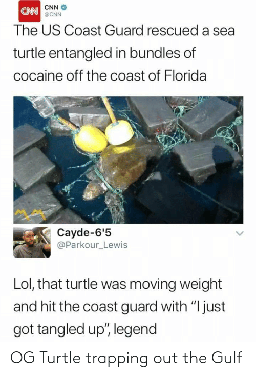 """trapping: CNN  The US Coast Guard rescued a sea  turtle entangled in bundles of  cocaine off the coast of Florida  @CNN  Cayde-6'5  @Parkour_Lewis  Lol, that turtle was moving weight  and hit the coast guard with """"Ijust  got tangled up"""", legend OG Turtle trapping out the Gulf"""