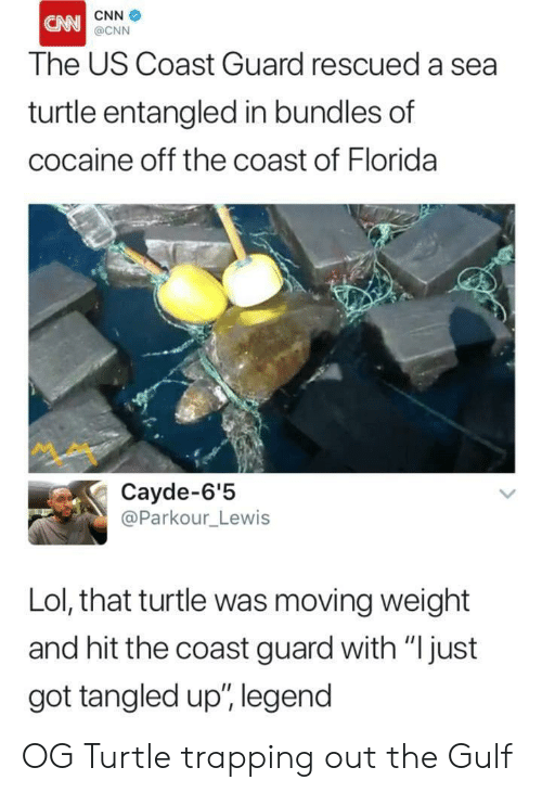 """trapping: CNN  The US Coast Guard rescued a sea  turtle entangled in bundles of  cocaine off the coast of Florida  @CNN  ペペ  Cayde-6'!5  @Parkour_Lewis  Lol, that turtle was moving weight  and hit the coast guard with """"Ijust  got tangled up"""", legend OG Turtle trapping out the Gulf"""