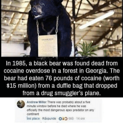 Overdose: COCAINE BEAN  In 1985, a black bear was found dead from  cocaine overdose in a forest in Georgia. The  bear had eaten 76 pounds of cocaine (worth  $15 million) from a duffle bag that dropped  from a drug smuggler's plane.  Andrew Miller There was probably about a five  minute window before he died where he was  officially the most dangerous apex predator on any  continent  imi place Răspunde Og 660 . 14 ore