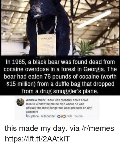 Memes, Apex, and Bear: COCAINE EA  In 1985, a black bear was found dead from  cocaine overdose in a forest in Georgia. The  bear had eaten 76 pounds of cocaine (worth  $15 million) from a duffle bag that dropped  from a drug smuggler's plane.  Andrew Miller There was probably about a five  minute window before he died where he was  officially the most dangerous apex predator on any  continent  imi place . Răspunde 680 14 ore this made my day. via /r/memes https://ift.tt/2AAtkIT