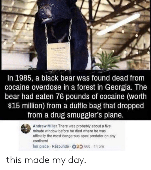 Overdose: COCAINE EA  In 1985, a black bear was found dead from  cocaine overdose in a forest in Georgia. The  bear had eaten 76 pounds of cocaine (worth  $15 million) from a duffle bag that dropped  from a drug smuggler's plane.  Andrew Miller There was probably about a five  minute window before he died where he was  officially the most dangerous apex predator on any  continent  imi place . Răspunde 680 14 ore this made my day.