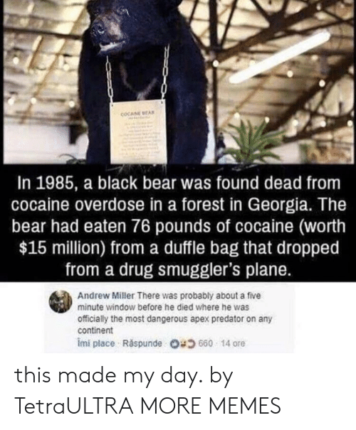 Overdose: COCAINE EA  In 1985, a black bear was found dead from  cocaine overdose in a forest in Georgia. The  bear had eaten 76 pounds of cocaine (worth  $15 million) from a duffle bag that dropped  from a drug smuggler's plane.  Andrew Miller There was probably about a five  minute window before he died where he was  officially the most dangerous apex predator on any  continent  imi place . Răspunde 680 14 ore this made my day. by TetraULTRA MORE MEMES