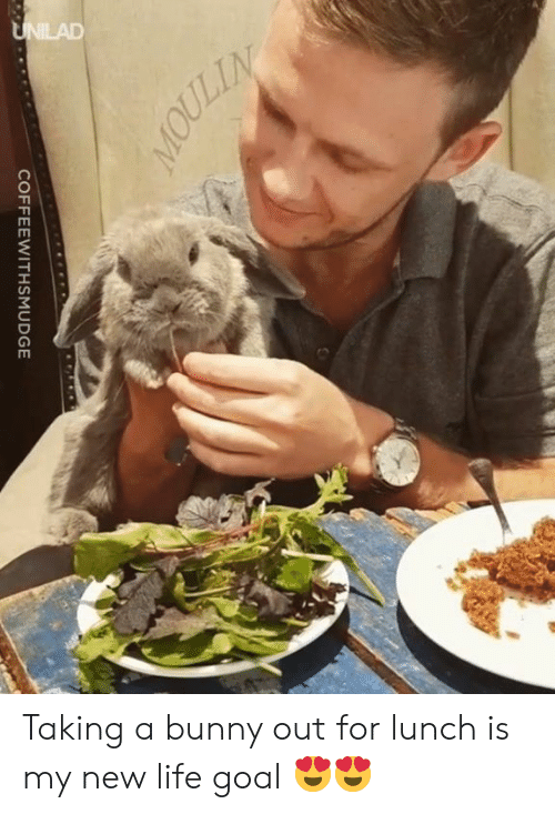 Dank, Life, and Goal: COFFEEWITHSMUDGE Taking a bunny out for lunch is my new life goal 😍😍
