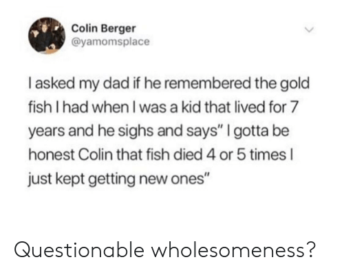 """Dad, Fish, and Gold: Colin Berger  @yamomsplace  I asked my dad if he remembered the gold  fish I had when I was a kid that lived for 7  years and he sighs and says"""" I gotta be  honest Colin that fish died 4 or 5 times l  just kept getting new ones"""" Questionable wholesomeness?"""