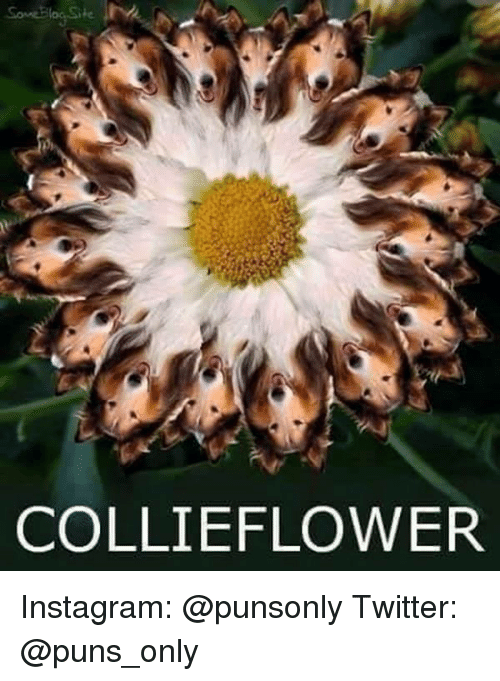 collie: COLLIE FLOWER Instagram: @punsonly Twitter: @puns_only