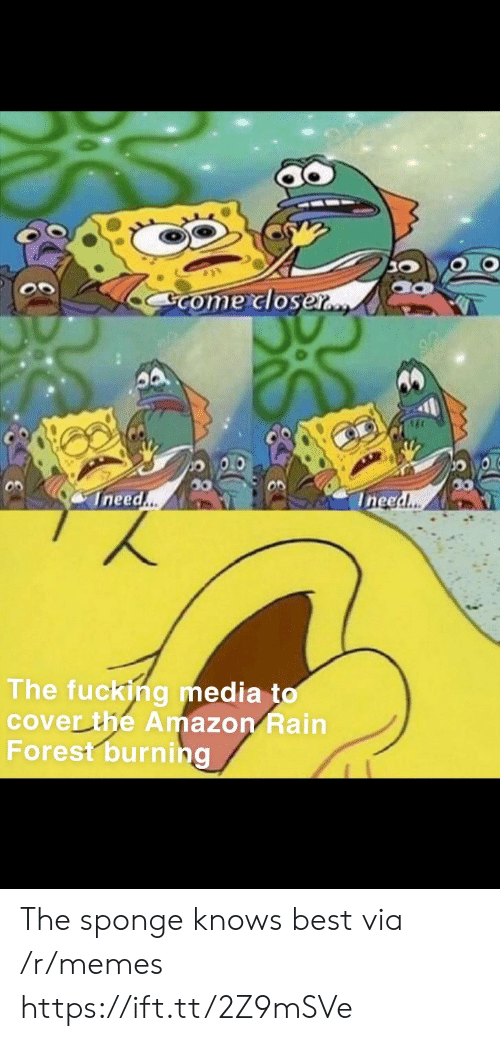 Amazon, Fucking, and Memes: Come closer..  Ineed..  Ineed..  The fucking media to  cover the Amazon Rain  Forest burning The sponge knows best via /r/memes https://ift.tt/2Z9mSVe