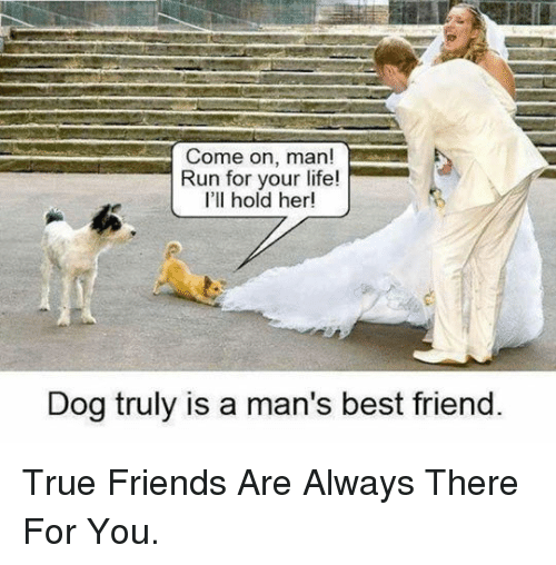 run for your life: Come on, man!  Run for your life!  I'll hold her!  Dog truly is a man's best friend <p>True Friends Are Always There For You.</p>