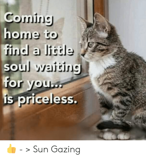 Coming Home: Coming  home to  find a little  soul waiting  for you  is priceless. 👍 - > Sun Gazing