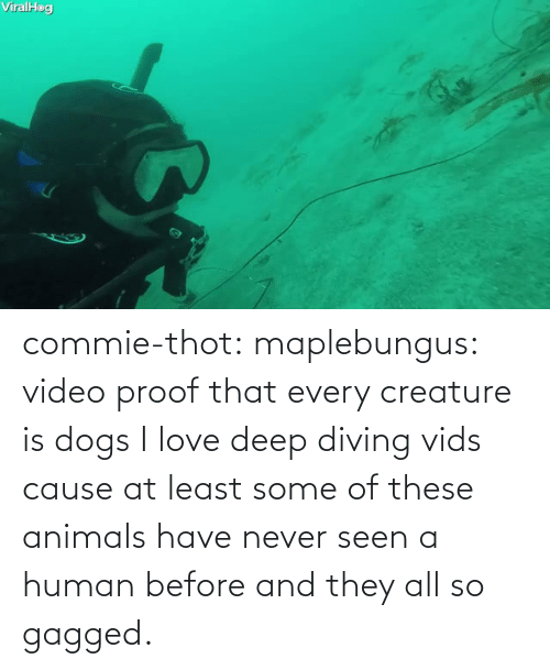 gagged: commie-thot:  maplebungus: video proof that every creature is dogs  I love deep diving vids cause at least some of these animals have never seen a human before and they all so gagged.
