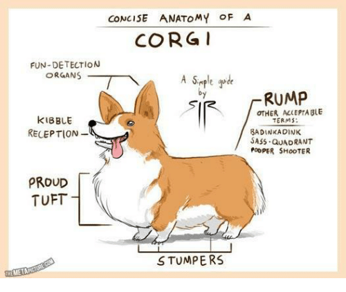 Corg: CONCISE ANATOMY OFA  CORG  FUN-DETECTION  ORGANS  by  -RUMP  OTHER ALLEPTABLE  KIBBLE  RECEPTION-  TERMS:  BADINKADINK  SASS QuADRANT  POOPER SH00TER  PROUD  TUFT  STUMPERS  ME