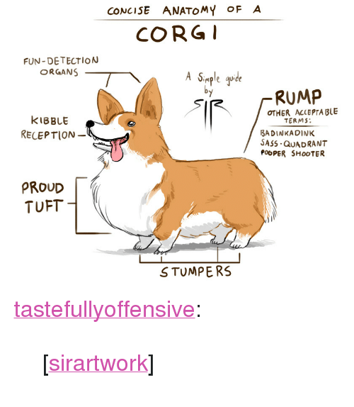"""Corg: CONCISE ANATOMY OFA  CORG  FUN-DETECTION  ORGANS  imple que  RUMP  OTHER ACLEPTA BLE  KIBBLE  RELEPTION  TERMS  BADINKADINK  SASS QUADRANT  POOPER SHOOTER  PROUD  TUFT  STUMPERS <p><a class=""""tumblr_blog"""" href=""""http://tumblr.tastefullyoffensive.com/post/85532396996/sirartwork"""" target=""""_blank"""">tastefullyoffensive</a>:</p> <blockquote> <p>[<a class=""""tumblr_blog"""" href=""""http://sirartwork.tumblr.com/post/45464061263/i-made-this-so-people-could-better-understand-this"""" target=""""_blank"""">sirartwork</a>]</p> </blockquote>"""