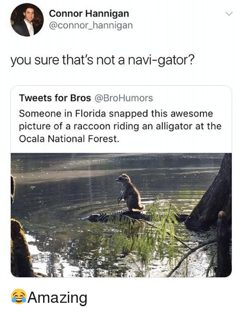 navi: Connor Hannigan  @connor_hannigarn  you sure that's not a navi-gator?  Tweets for Bros @BroHumors  Someone in Florida snapped this awesome  picture of a raccoon riding an alligator at the  Ocala National Forest. 😂Amazing