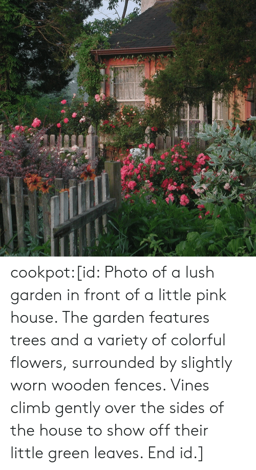 climb: cookpot:[id: Photo of a lush garden in front of a little pink house. The garden features trees and a variety of colorful flowers, surrounded by slightly worn wooden fences. Vines climb gently over the sides of the house to show off their little green leaves. End id.]