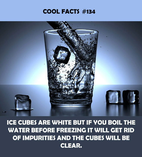 freezing: COOL FACTS #134  ICE CUBES ARE WHITE BUT IF YOU BOIL THE  WATER BEFORE FREEZING IT WILL GET RID  OF IMPURITIES AND THE CUBES WILL BE  CLEAR.