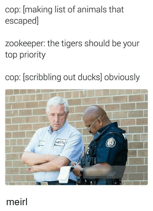 list of animals: cop: [making list of animals that  escaped]  zookeeper: the tigers should be your  top priority  cop: [scribbling out ducks] obviously meirl