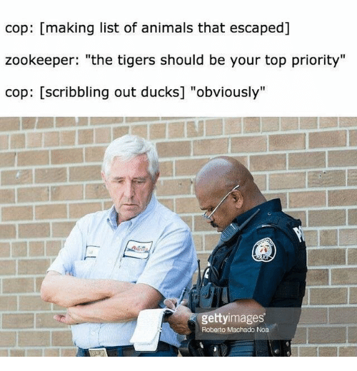 """list of animals: cop: [making list of animals that escaped]  zookeeper: """"the tigers should be your top priority""""  cop: [scribbling out ducks] """"obviously""""  gettyimages  Roberto Machado Noa"""