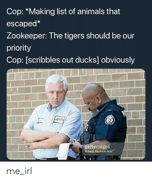 list of animals: Cop: *Making list of animals that  escaped*  Zookeeper: The tigers should be our  priority  Cop: [scribbles out ducks] obviously  gettyimages  Roberto Mochado Noa me_irl