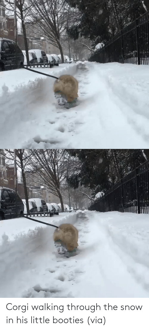 Little: Corgi walking through the snow in his little booties (via)