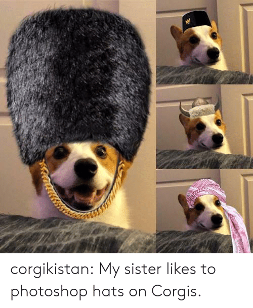 Corgis: corgikistan:  My sister likes to photoshop hats on Corgis.