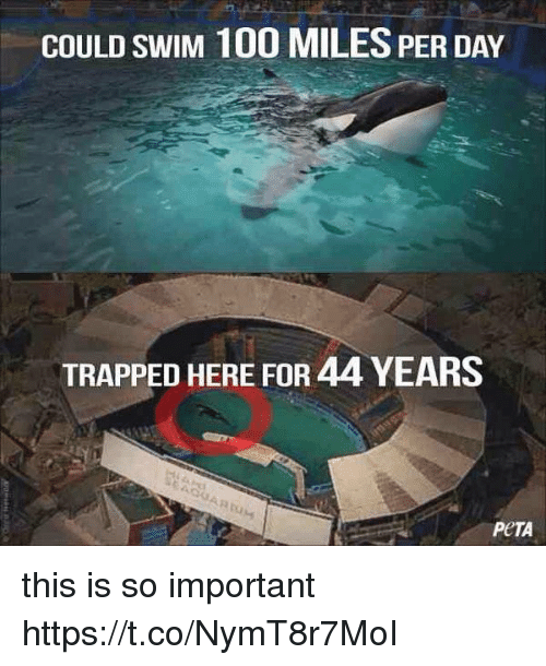 Anaconda, Peta, and Girl Memes: COULD SWIM 100 MILES PER DAY  TRAPPED HERE FOR 44 YEARS  PeTA this is so important https://t.co/NymT8r7MoI