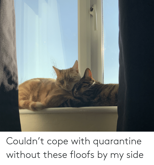 cope: Couldn't cope with quarantine without these floofs by my side