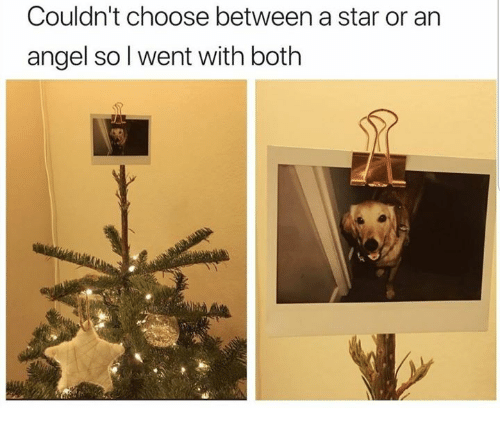 Angel, Star, and Humans of Tumblr: Couldn't choose between a star or an  angel so l went with both
