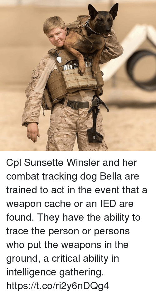 Cache: Cpl Sunsette Winsler and her combat tracking dog Bella are trained to act in the event that a weapon cache or an IED are found. They have the ability to trace the person or persons who put the weapons in the ground, a critical ability in intelligence gathering. https://t.co/ri2y6nDQg4