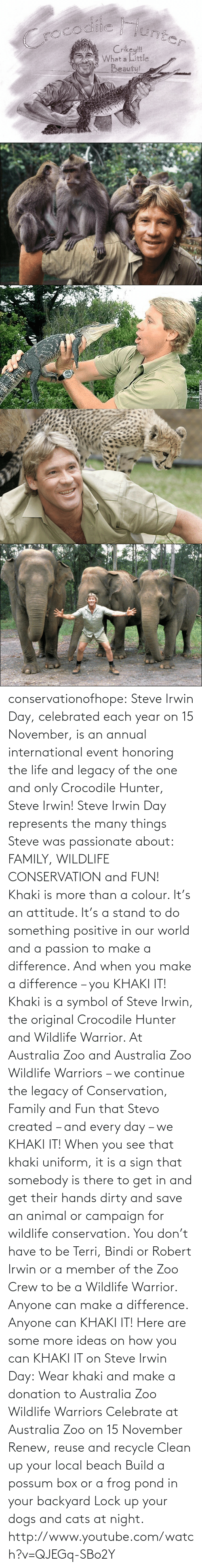 Reuse: CroCodilie junt  Crikey!!  What a Little  Beauty!   IMAGES) conservationofhope:  Steve Irwin Day, celebrated each year on 15 November, is an annual international event honoring the life and legacy of the one and only Crocodile Hunter, Steve Irwin! Steve Irwin Day represents the many things Steve was passionate about: FAMILY, WILDLIFE CONSERVATION and FUN! Khaki is more than a colour. It's an attitude. It's a stand to do something positive in our world and a passion to make a difference. And when you make a difference – you KHAKI IT! Khaki is a symbol of Steve Irwin, the original Crocodile Hunter and Wildlife Warrior. At Australia Zoo and Australia Zoo Wildlife Warriors – we continue the legacy of Conservation, Family and Fun that Stevo created – and every day – we KHAKI IT! When you see that khaki uniform, it is a sign that somebody is there to get in and get their hands dirty and save an animal or campaign for wildlife conservation. You don't have to be Terri, Bindi or Robert Irwin or a member of the Zoo Crew to be a Wildlife Warrior. Anyone can make a difference. Anyone can KHAKI IT!  Here are some more ideas on how you can KHAKI IT on Steve Irwin Day: Wear khaki and make a donation to Australia Zoo Wildlife Warriors Celebrate at Australia Zoo on 15 November Renew, reuse and recycle Clean up your local beach Build a possum box or a frog pond in your backyard Lock up your dogs and cats at night. http://www.youtube.com/watch?v=QJEGq-SBo2Y