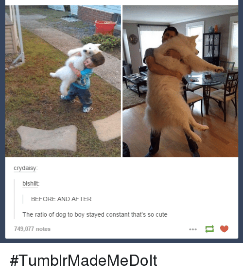Dank, 🤖, and Dog: cry daisy:  blshiit.  BEFORE AND AFTER  The ratio of dog to boy stayed constant that's so cute  749,077 notes #TumblrMadeMeDoIt