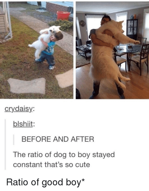 The Ratio: crydaisy  blshiit  BEFORE AND AFTER  The ratio of dog to boy stayed  constant that's so cute Ratio of good boy*