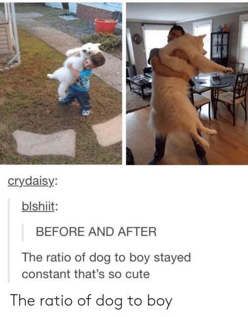 The Ratio: crydaisy  blshiit  BEFORE AND AFTER  The ratio of dog to boy stayed  constant that's so cute The ratio of dog to boy