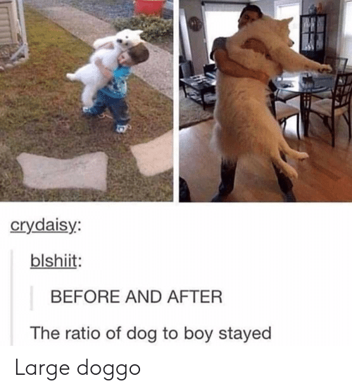 The Ratio: crydaisy:  blshiit:  BEFORE AND AFTER  The ratio of dog to boy stayed Large doggo