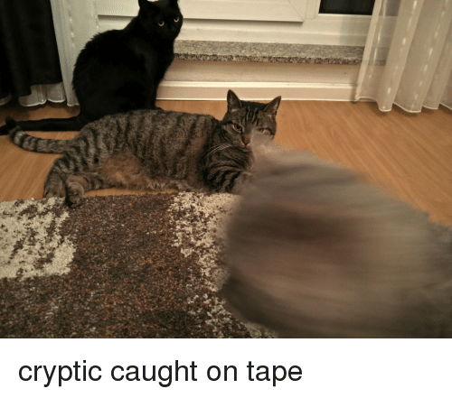 Cryptic: cryptic caught on tape