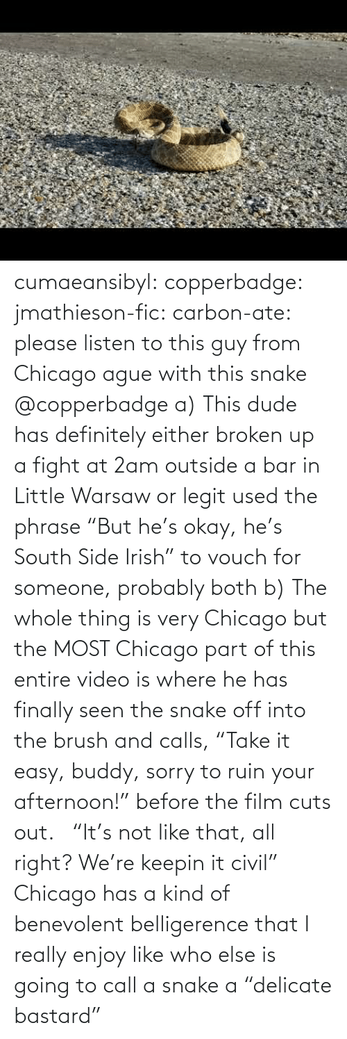 "Sorry: cumaeansibyl: copperbadge:  jmathieson-fic:  carbon-ate: please listen to this guy from Chicago ague with this snake @copperbadge  a) This dude has definitely either broken up a fight at 2am outside a bar in Little Warsaw or legit used the phrase ""But he's okay, he's South Side Irish"" to vouch for someone, probably both b) The whole thing is very Chicago but the MOST Chicago part of this entire video is where he has finally seen the snake off into the brush and calls, ""Take it easy, buddy, sorry to ruin your afternoon!"" before the film cuts out.    ""It's not like that, all right? We're keepin it civil"" Chicago has a kind of benevolent belligerence that I really enjoy like who else is going to call a snake a ""delicate bastard"""