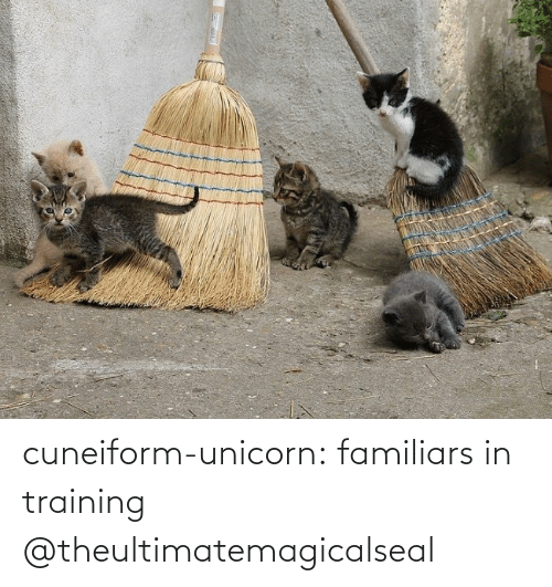 M: cuneiform-unicorn: familiars in training @theultimatemagicalseal