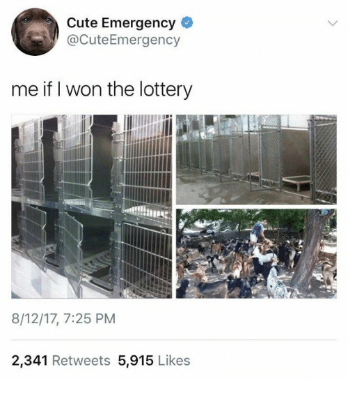 Wonned: Cute Emergency  @CuteEmergency  me if I won the lottery  8/12/17, 7:25 PM  2,341 Retweets 5,915 Likes